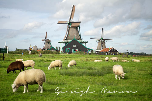 Dutch windmills cheese farms and wooden shoes at zaanse Farm house netherlands
