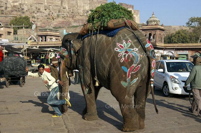 Jodhpur elephant